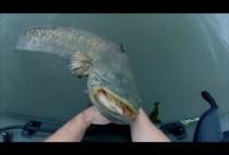 Рыбак достает сома из реки