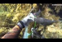 Рыбы на кукане