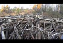 Место проведения охоты на рябчика
