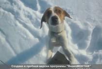 Собака смотрит на охотника