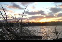 Вид на болото
