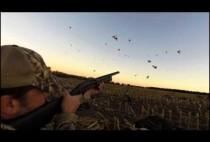 Охотник стреляет по гусям