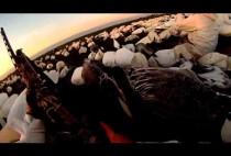 Поле уставленное чучелами гусей