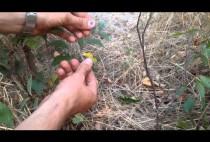 Охотник устанавливает петли на фазана