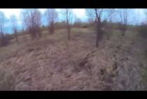 Лес веной
