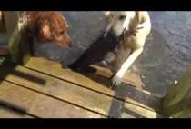 Собака поймала сома