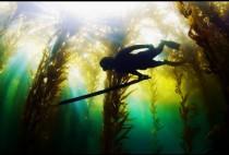 Подводный охотник с копьем