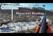 Охотник целится в пролетающего фазана