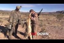 Охотники разглядывают волка