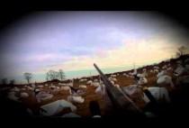 Охотник целится в белого гуся