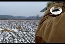 Охотники поджидают лису у норы