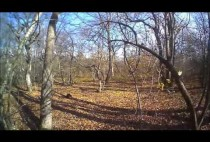 Осенний лес в Джорджии