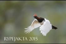 Летящий рябчик