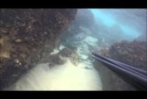 Охотник плывет под водой