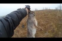 Охотник держит зайца за уши