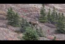 Пейзаж в Канаде