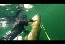 Охотник поднимает рыбу к поверхности