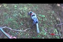 Собака ищет вальдшнепа