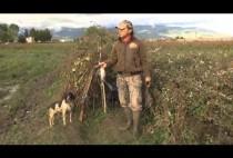 Итальянский охотник на куропаток