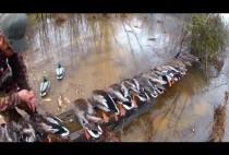 Добытые охотниками утку