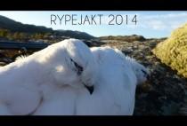 Снежные куропатки из Норвегии