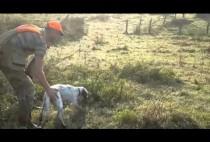 Охотник с сеттером на поле