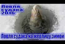 Рыбак достает судака из лунки