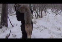 Охотник несет рысь на плечах
