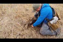 Охотник подбирает фазана