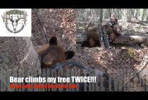 Медведь лезет на дерево