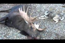 Охотник на лосей