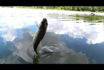 Рыбак вытаскивает рыбу из воды