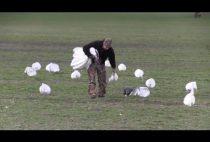 Охотник расставляет чучела гусей
