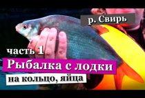 Лещ в руках рыбака
