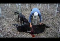Охотник разделывает медведя