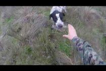 Собака подает охотнику куропатку