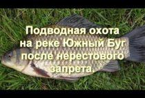 Добытая охотником рыба