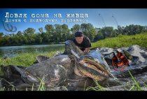Рыбак с пойманным сомом