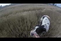 Собака подносит куропатку