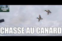 Летящие утки