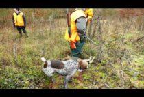 Охотники с собаками
