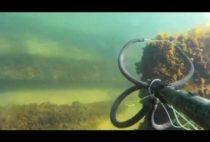 Подводная охотник с ружьем