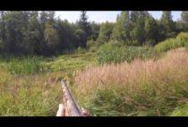 Охотник стреляет в утку