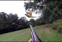 Охотник цедится в фазана