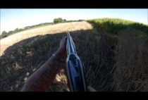 Охотник возле кукурузного поля