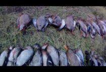 Добытые охотниками птицы
