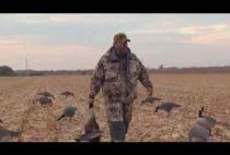 Охотник подбирает добытых гусей