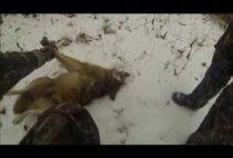 Добытый волк на снегу