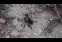 Паук на камне