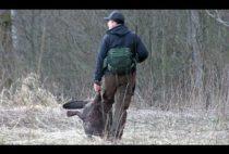 Норвежский охотник на бобра